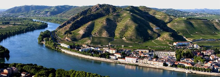 Vins du Rhône • Winozof