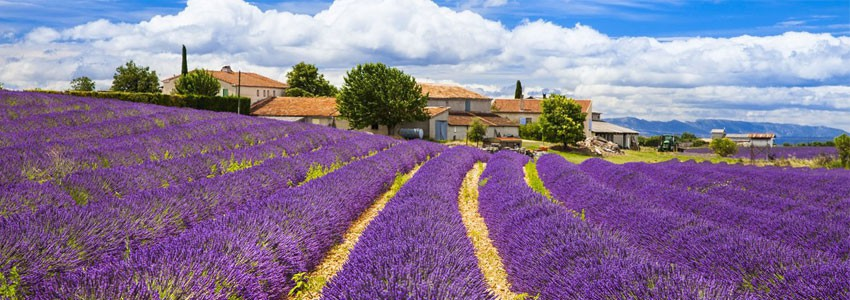 Provence • Winozof