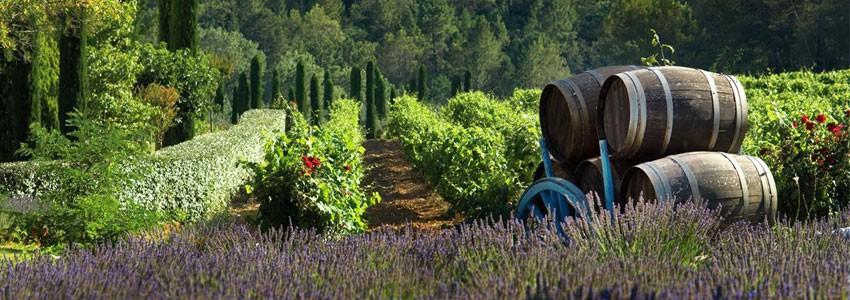 Côtes-de-provence • Winozof